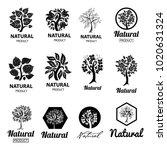 vector set of design elements... | Shutterstock .eps vector #1020631324
