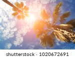 high palm trees and a blue sky... | Shutterstock . vector #1020672691