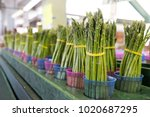 rows of bunched asparagus at a... | Shutterstock . vector #1020687295