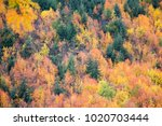 colorful foliage abstract... | Shutterstock . vector #1020703444
