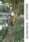 painted stork   the painted...   Shutterstock . vector #1020723685