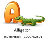 letter a is for alligator...   Shutterstock .eps vector #1020762601