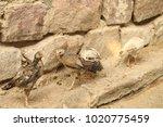 hens in a rural area | Shutterstock . vector #1020775459
