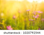 lilac pink flowers in green... | Shutterstock . vector #1020792544