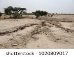arid landscape in north senegal....