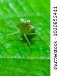 macro closeup on young green...   Shutterstock . vector #1020853411