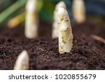 new harvest of high quality... | Shutterstock . vector #1020855679