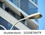 black crow  corvus corone ... | Shutterstock . vector #1020878479