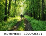 spring forest. man and woman in ... | Shutterstock . vector #1020926671