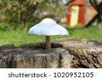 Mushroom Growing From A Stump...