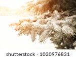 beautiful snow on branch of fir ... | Shutterstock . vector #1020976831