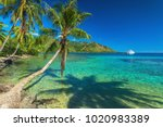 palm trees and quiet bay at... | Shutterstock . vector #1020983389