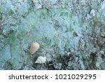 fossil shell on the sedimentary ... | Shutterstock . vector #1021029295