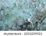 fossil shell on the sedimentary ... | Shutterstock . vector #1021029331