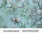 fossil shell on the sedimentary ... | Shutterstock . vector #1021042285