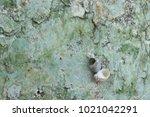 fossil shell on the sedimentary ... | Shutterstock . vector #1021042291