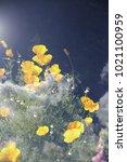 orange flowers in the clouds in ...   Shutterstock . vector #1021100959