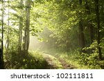 Forest Path On A Sunny May...