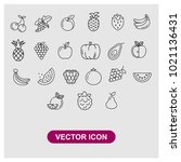 fruits vector icon in trendy... | Shutterstock .eps vector #1021136431