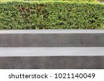 concrete stair and bushes on... | Shutterstock . vector #1021140049