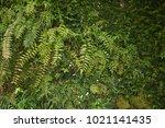 Fern Plants On A Rocky Slopes