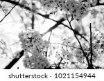close up and selective focus... | Shutterstock . vector #1021154944