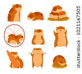 cute cartoon hamster characters ... | Shutterstock .eps vector #1021167505