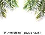 Coconut Green Beautiful Leaves...