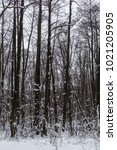trees in the winter forest. | Shutterstock . vector #1021205905