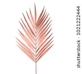 tropical palm leaf isolated on... | Shutterstock .eps vector #1021222444