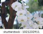 beautiful white orchids | Shutterstock . vector #1021232911