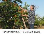 farmer or agronomist examining... | Shutterstock . vector #1021251601