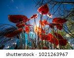 sun beams through glass flowers ... | Shutterstock . vector #1021263967