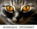 yellow cat's eyes    Shutterstock . vector #1021266865