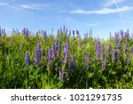 colorful natural background of... | Shutterstock . vector #1021291735