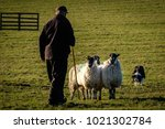 shepherd with working border... | Shutterstock . vector #1021302784