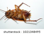 dead cockroaches in an... | Shutterstock . vector #1021348495