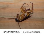 dead cockroaches in an... | Shutterstock . vector #1021348501