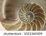 fossil golden ratio | Shutterstock . vector #1021360309