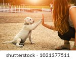 handshake between woman and dog ... | Shutterstock . vector #1021377511
