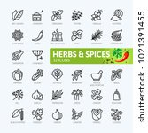 spices  condiments and herbs    ... | Shutterstock .eps vector #1021391455