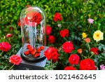 the eternal roses in the flask... | Shutterstock . vector #1021462645