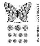 butterfly and flowers. set... | Shutterstock .eps vector #1021483165