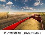 soy beans in tractor trailer... | Shutterstock . vector #1021491817