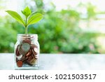 plant growing from coins in the ... | Shutterstock . vector #1021503517