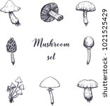 vector hand drawn mushrooms ... | Shutterstock .eps vector #1021525429