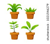 set home or indoor plant on pot ... | Shutterstock .eps vector #1021546279