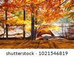 the beautiful maple season at... | Shutterstock . vector #1021546819
