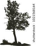 vector tree  sjomarken  sweden  ...   Shutterstock .eps vector #1021568164