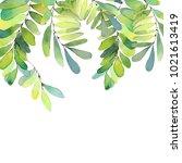 watercolor green twigs.... | Shutterstock . vector #1021613419